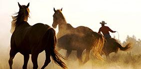 Pot commun chevaux